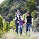 Wandern wo der Wein wächst